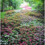 88-merano-tuinen-van-trauttmansdorff